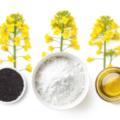 ポーランドNapiFerynがなたね油粕から代替タンパク質Rapteinを開発|大豆にかわる新しい植物性タンパク質となるか?