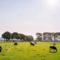 アニマルフリーな乳製品を開発する英Better Dairyが約2億2千万円を資金調達