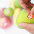 個人から企業まで|貼るだけで果物の鮮度を保持するシールを開発したRyp Labsとは